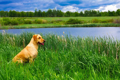 dog sitting on grass by the lake